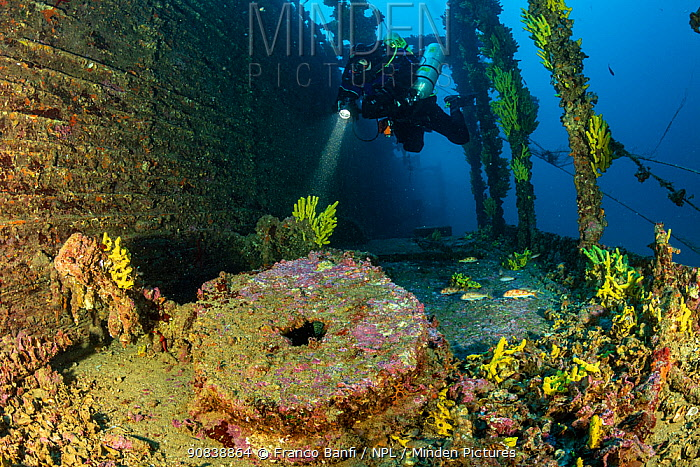 Rebreather diver exploring the sunken Brioni steam passenger/cargo ship, which sank in February 1930, with yellow sponges (Aplysina cavernicola), south-eastern coast of Vis Island, Croatia, Adriatic Sea. July 2019.