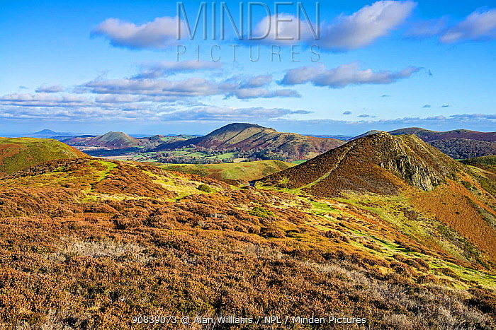 View looking north east on the Long Mynd with Bodbury Hill on the right and Caer Caradoc Hill and The Lawley in the background Shropshire, UK November 2019.
