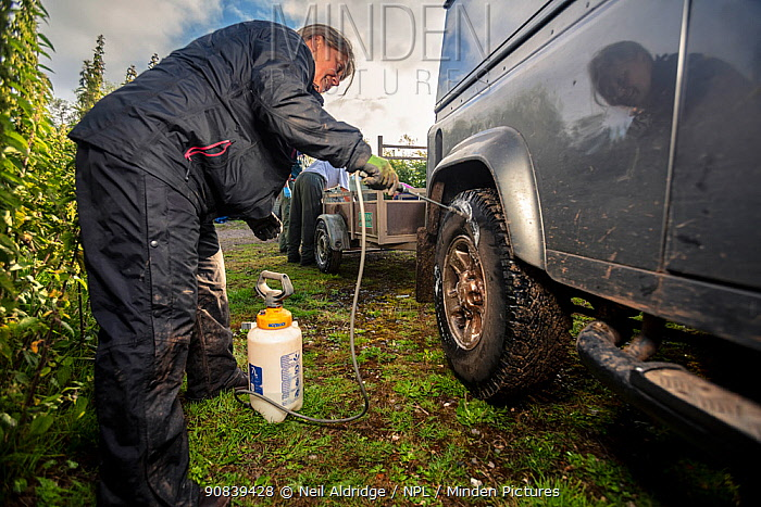 Tyres of a Land Rover used for transporting equipment for trapping and vaccinating European badgers (Meles meles) against TB are sprayed with disinfectant. North Somerset, UK. Badger vaccination programmes are being carried out in England as a means of controlling the spread of TB between badgers and cattle, and as a viable alternative to the controversial government-sanctioned cull of badgers.