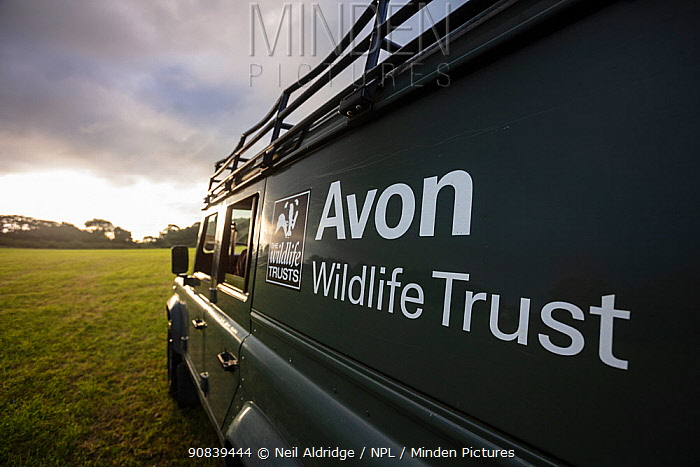 An Avon Wildlife Trust Land Rover on farmland at dawn during a programme to vaccinate European badgers (Meles meles) against TB in North Somerset, UK. Badger vaccination programmes are being carried out in England as a means of controlling the spread of TB between badgers and cattle, and as a viable alternative to the controversial government-sanctioned cull of badgers.