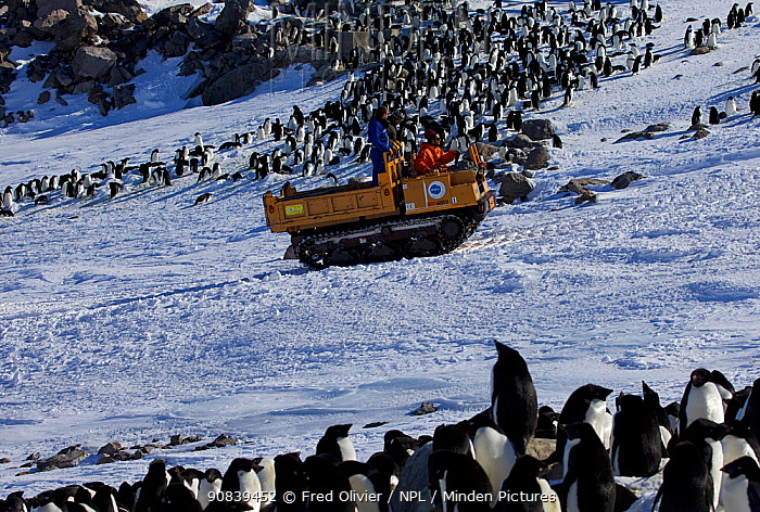 Tracked vehicle returning to Dumont d'Urville station past penguin colony, Antarctica, 2013.