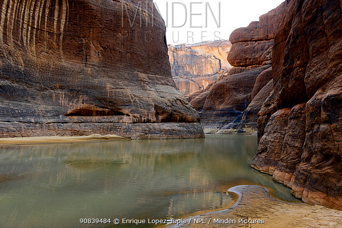 Guelta d'Archei, with permanent water where the last western crocodiles of the Sahara live. Ennedi Natural And Cultural Reserve, UNESCO World Heritage Site, Chad. September 2019.