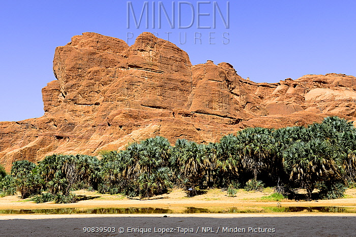 Eroded sandstone rock formations and trees in the Ennedi Natural And Cultural Reserve, UNESCO World Heritage Site, Sahara Desert,Chad. September 2019.