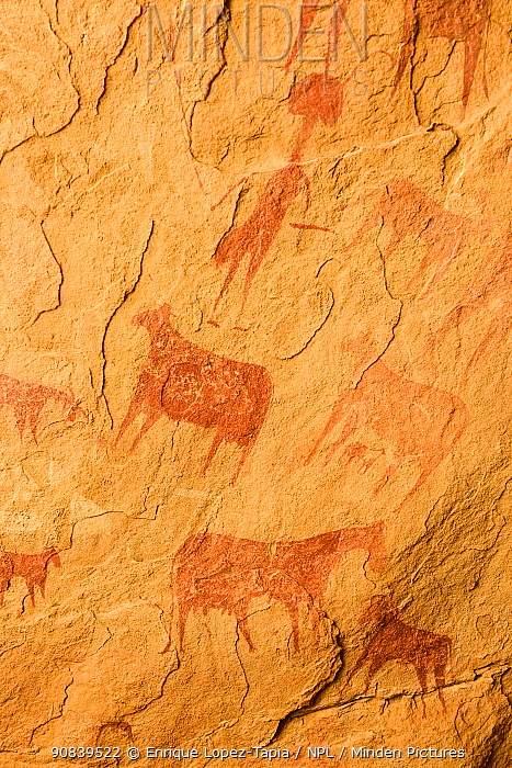 Ancient cave paintings in the Sahara Desert showing cattle, Ennedi Natural and Cultural Reserve, UNESCO World Heritage Site, Chad. September 2019.