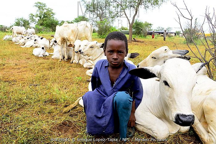 Kanoumoudji boy with the calves of the village. Nomadic herders in southern Chad September 2019.