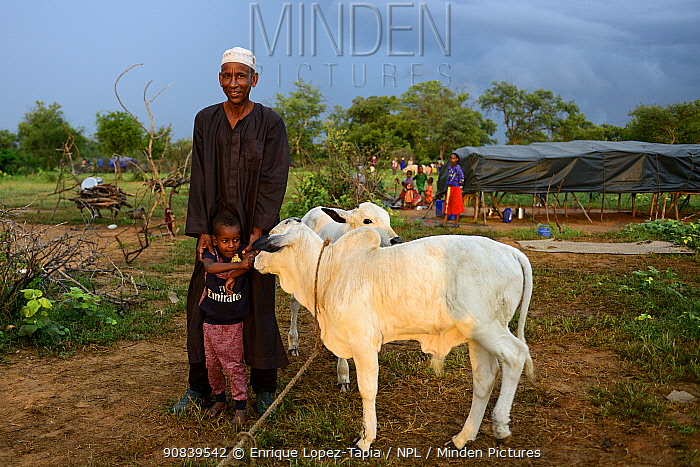 Kanoumoudji man with his grandson next to a calf. Nomadic herders in southern Chad. September 2019.