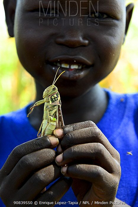 A child holding a migratory locust ,he has caught, South of Chad. September 2019.