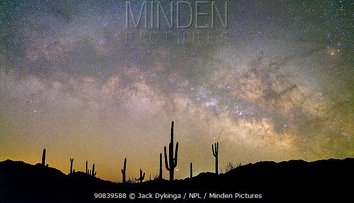 Saguaro (Carnegiea gigantea) cacti silhouetted under Milky Way in pre-dawn light. Cabeza Prieta National Wildlife Refuge, Sonoran Desert, Arizona, USA. February 2020.