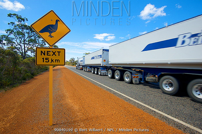 Road sign warning of Malleefowl (Leipoa ocellata) for the next 15km, road train in background. Chester Pass Road, Western Australia. November 2019.