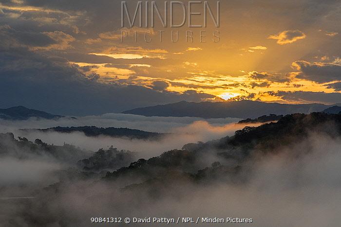 Tropical rainforest landscape at the edge of Carara National Park at sunrise Carara National Park, Tarcoles, Costa Rica