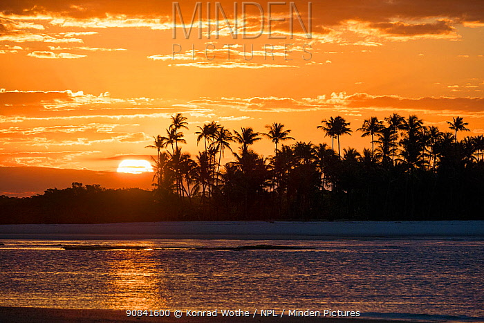 Sunset with coconut palms (Cocos nucifera) Boipeba Island, Bahia, Brazil.