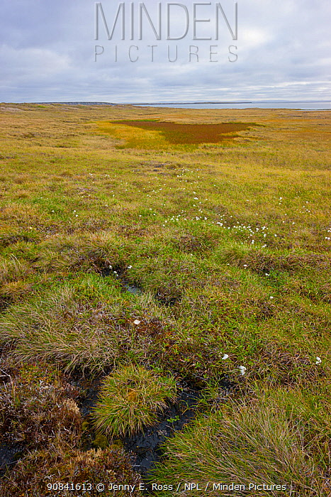 Arctic tundra with frost-wedging features caused by repeated freeze-thaw processes in soil, as well as slumping and and surface water accumulation from thawing permafrost. Amguema River Estuary Region, Chukchi Sea, Chukotka, Siberia, Russia.