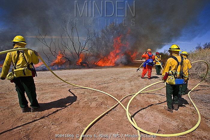Firefighters monitoring controlled burn of dense cattail marsh at the Sonny Bono Salton Sea National Wildlife Refuge. Burned as habitat management to benefit the endangered Yuma clapper rail (Rallus longirostris yumanensis) California, USA, March 2009.