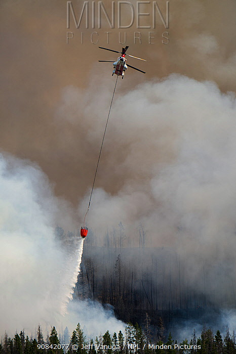 CH-47 helic0poter dropping water on the Lava Mountain Fire in Shoshone National Forest, Wyoming, USA, July 2016