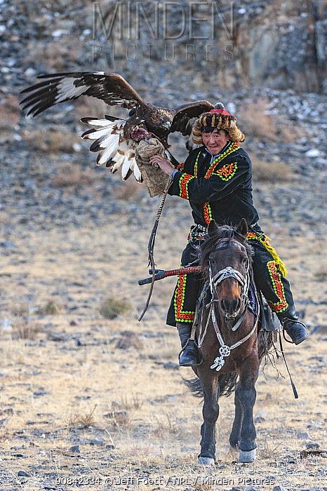 Eagle hunter with female golden eagle (Aquila chrysaetos) at the Eagle Hunters festival nearing finish line. Near Ulgii Western Mongolia. Medium repro only