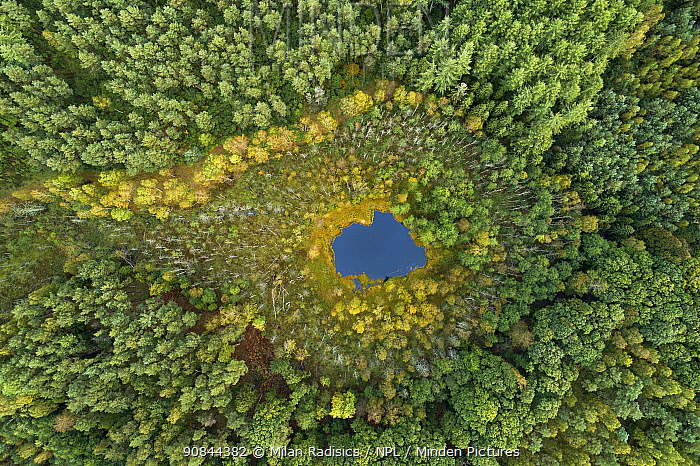 Aerial view of dystrophic forest lake surrounded by peatbog. East Pomerania, Baltic region of Poland. Brodnica forest. September 2019. Highly commended in the Landscapes, Waterscapes and Flora Category of the Big Picture Photography Competition.