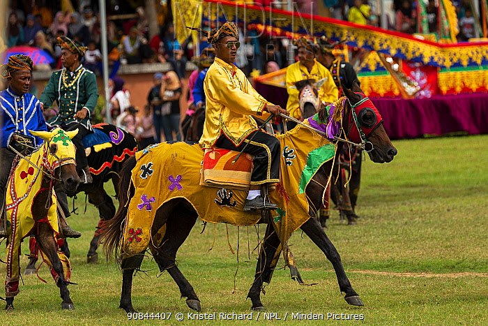 Traditionally dressed Bajau horsemen, also known as the Cowboys of the East, display their riding skills on colourfully dressed Bajau horses, during the Tamu Besar (Big Market) Festival, in Kota Belud, Sabah, Borneo, Malaysia