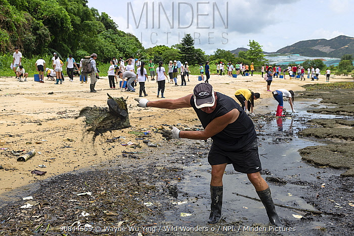 Horseshoe crab release event oragnized by Ocean Park Conservation Foundation, Hak Pak Nai beach, Yue Long, Hong Kong, China