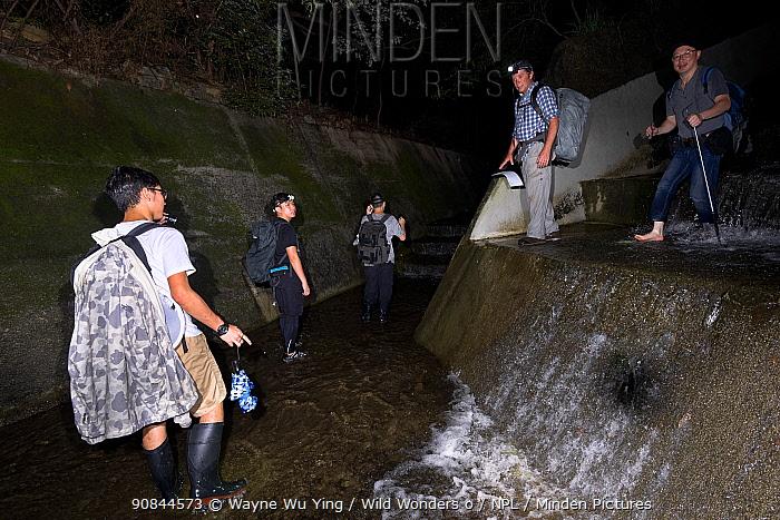 Photographers and local experts looking for amphibians and reptiles in aqueduct at night, Lantau Island, Hong Kong, China