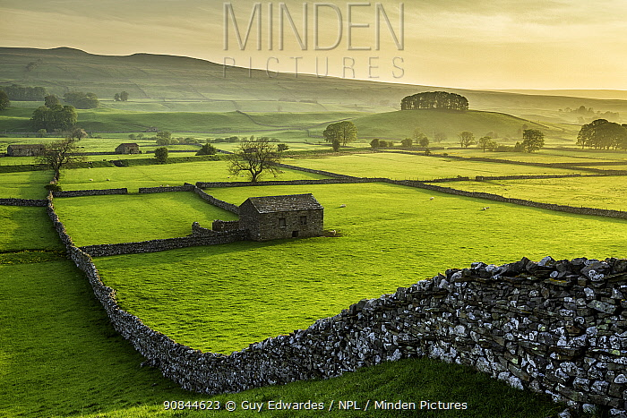 Barn amongst network of meadows and drystone walls, on summer morning. Wensleydale, Yorkshire Dales National Park, North Yorkshire, England, UK. May 2014.