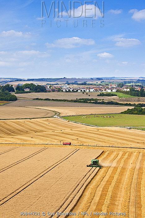 Combine harvester harvesting cereal crop, Poundbury in background. Maiden Castle, Dorset, England. August 2010.
