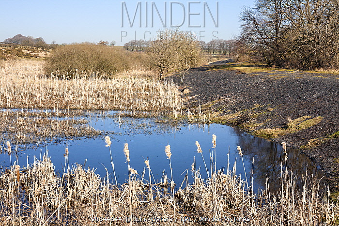 Ponds and banks of slag from old lead mining works on the Mendip Hills near Charterhouse, Somerset, UK, February 2019,