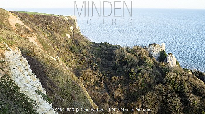 Hooken Undercliff, massive landslip that occured in 1790, now colonised by woodland and scrub, west of Beer, Devon. March 2020,