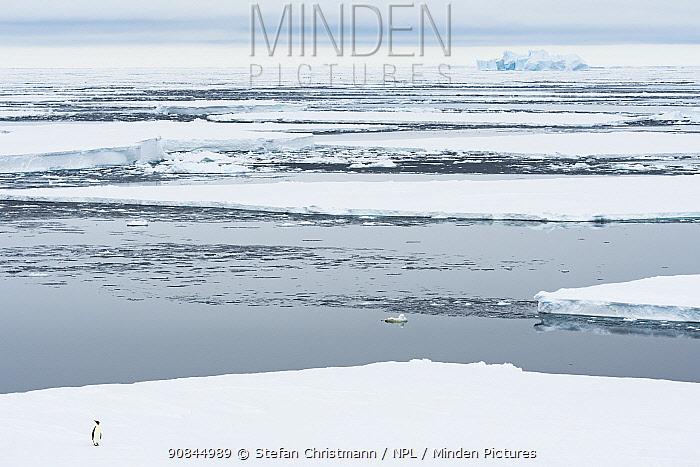 Emperor penguin (Aptenodytes fosteri) standing on sea ice breaking up in polar summer, Atka Bay, Antarctica. Bookplate.