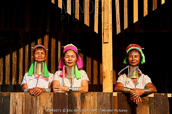 Kayan Lahwi women wearing brass neck coils and traditional clothing, stand on house deck . The Long Neck Kayan (also called Padaung in Burmese) are a sub-group of the Karen ethnic people from Burma. They wear brass rings around their neck and lower legs.They are also nicknamed 'giraffe women'. Pan Pet Region, Kayah State, Myanmar April 2019.