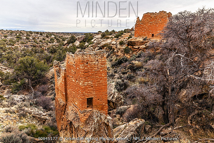 Structure built by ancestral Pueblo people at The Holly Site in Hovenweep National Monument, Utah, USA, March.