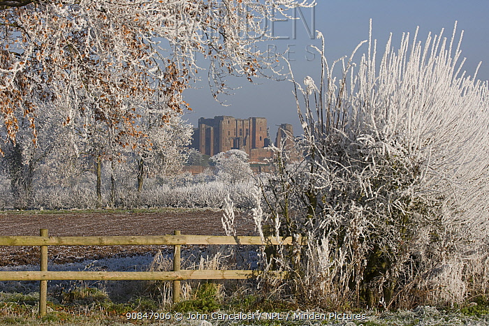View of the ruins of Kenilworth Castle, through hedgerow and fence, covered in hoar frost Warwickshire, England, UK, December 2010
