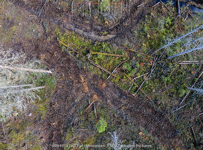 Aerial view of virgin coniferous forest after logging. Ski, Akershus, Norway. Sequence 2/2.