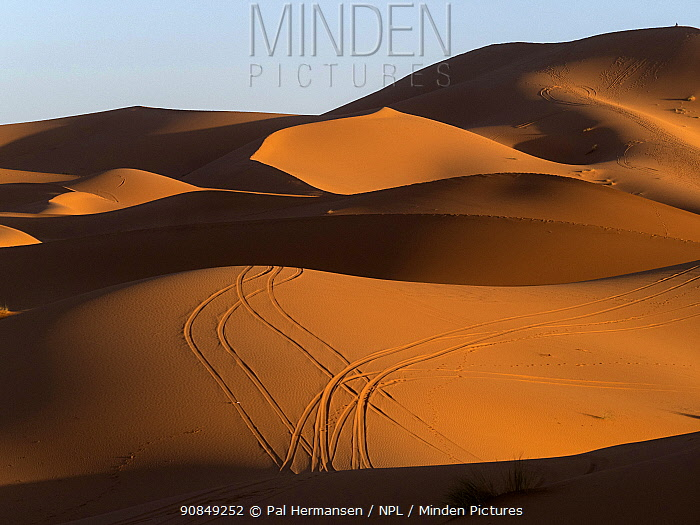 Tyre tracks on sand dunes of Erg Chebbi, shadows in morning light. South Morocco. October 2019.