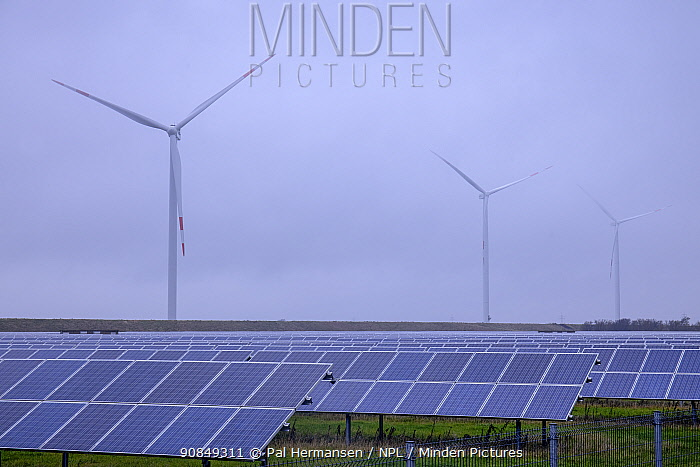 Photovoltaic panels in field, wind turbines in background. North Frisia, Schleswig-Holstein, Germany. November 2019.