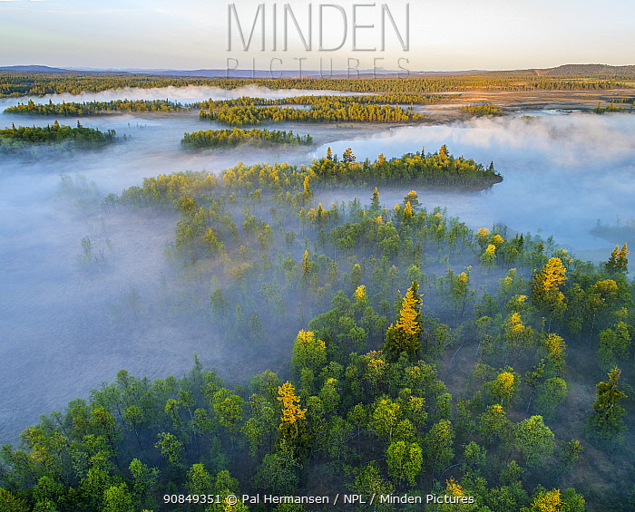 Forests and bogs in morning mist, aerial view. Golsfjell, Viken, Norway. May 2018.
