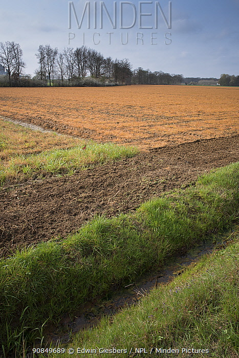 View across ditch to field treated with glyphosate weedkiller in preparation for replanting. Veghel, North Brabant, The Netherlands, March 2019.