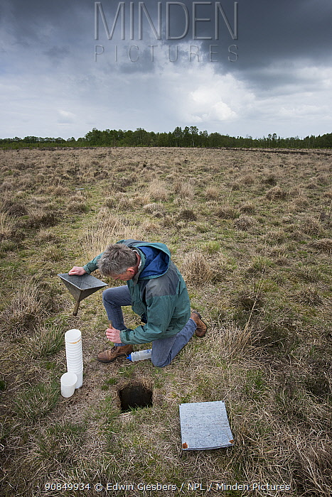 Researcher emptying Ground beetles (Carabidae) from pitfall trap. Long-term monitoring has revealed a 72 percent reduction in Ground beetle numbers in past 22 years. Dwingelderveld National Park, The Netherlands. May 2018. Model released.