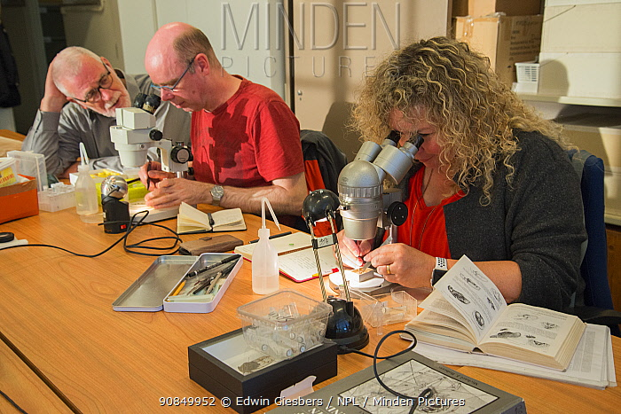 Entomologist from the KNNV association of field biologists identifying insects using microscopes. Nature Museum Brabant, Tilburg, The Netherlands. 2019.