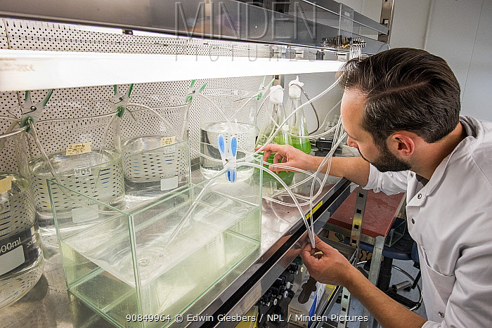 Ecotoxicologist conducting research in laboratory into impact of the neonicotinoid thiacloprid on aquatic organisms. Organisms found to be 2500 times more sensitive to the insecticide in the natural environment than in a lab. Living Lab, BioScience Park, Leiden University, The Netherlands. 2019. Model released.