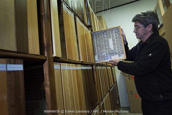 Entomologist returning tray of pinned Moth (Lepidoptera) specimens to shelf within collection. Entomological Society Krefeld. Germany 2018.
