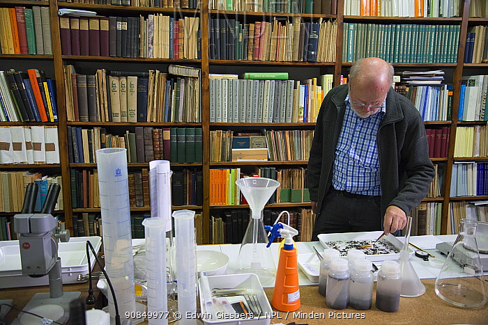 Entomologist with sample of Insects caught in malaise trap, reference books in background. Long-term monitoring has revealed a 75% decline in insect biomass over 27 years. Entomological Society Krefeld, Germany 2019.