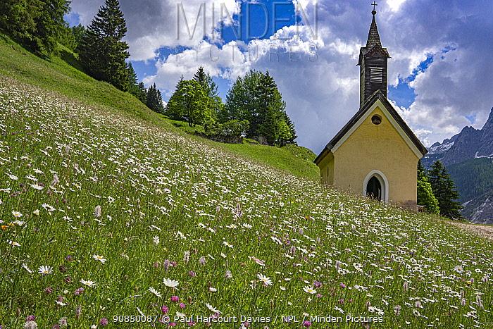 Church in alpine meadow with Oxeye daisy (Leucanthemum vulgare) and Hoary plantain (Plantago media). Penia di Canazei, Fassa Valley, Dolomites, Trentino, Italy. June 2019.