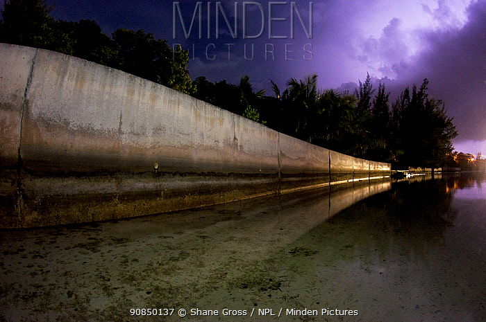 Cement seawall during a lightning storm, The Bahamas. Seawalls that replace mangroves do a worse job at protecting islands, are far more expensive, and don't offer the ecological benefits of mangroves. June 2015.