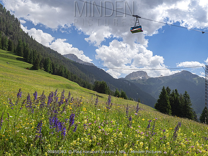 Cable car over species rich alpine meadow with Meadow clary (Salvia pratensis) and Yellow rattle (Rhinanthus sp), coniferous forest on mountains in background. Fassa Valley, Dolomites, Trentino, Italy. June 2019.