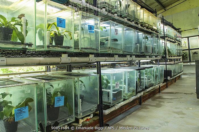 Vivaria used for captive breeding of Horned marsupial frogs (Gastrotheca cornuta) at the EVACC (El Valle de Anton Conservation Centre), El Valle de Anton, Panama.
