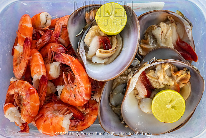 Live chocolate clams and fresh shrimp served with lemon, Puerto San Carlos, a fishing community facing the Pacific Ocean. Magdalena Bay, Baja California, Mexico.