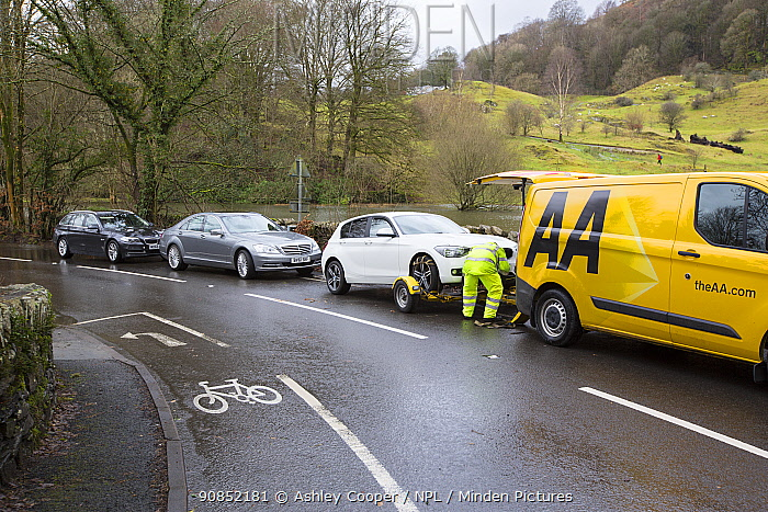 Breakdown vehicle picking up cars broken down in floodwaters of Storm Ciara. Rothay Bridge, Ambleside, Lake District, England, UK. February 2020.