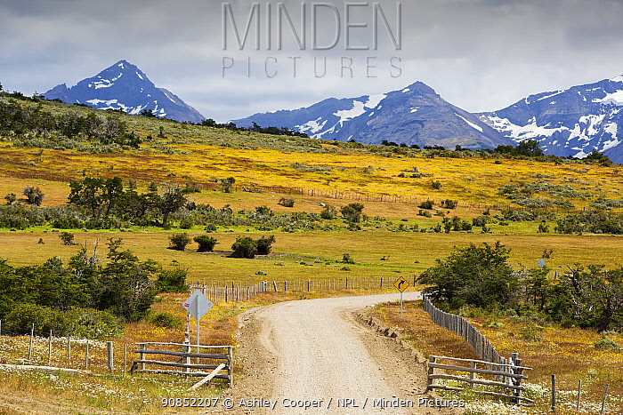 Road to Lago Sofia through grassland and scrub, mountains in background. Magallanes, Patagonia, Chile. January 2020.