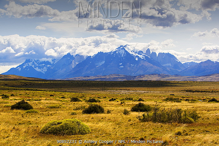 Steppe with mountains above. Torres del Paine National Park, Patagonia, Chile. January 2020.