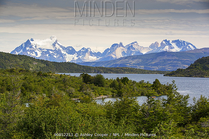 Lago del Toro surrounded by forest, mountains in background. Torres del Paine National Park, Patagonia, Chile. January 2020.